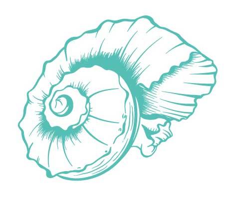 Empath Healing Benefits of the Seashell Conch