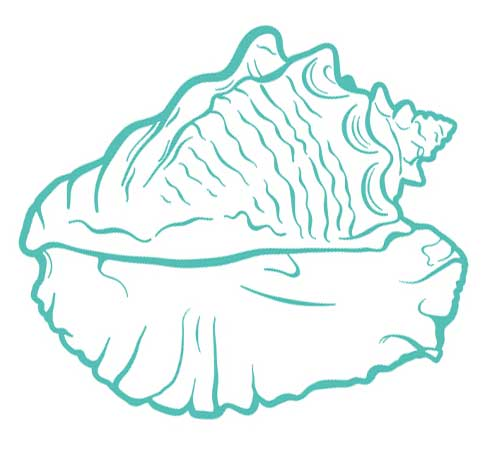 Empath Healing Benefits of the Sea Shell spiky